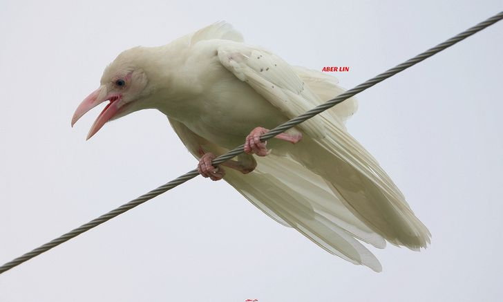 23 animaux albinos qui semblent provenir d'une autre planète