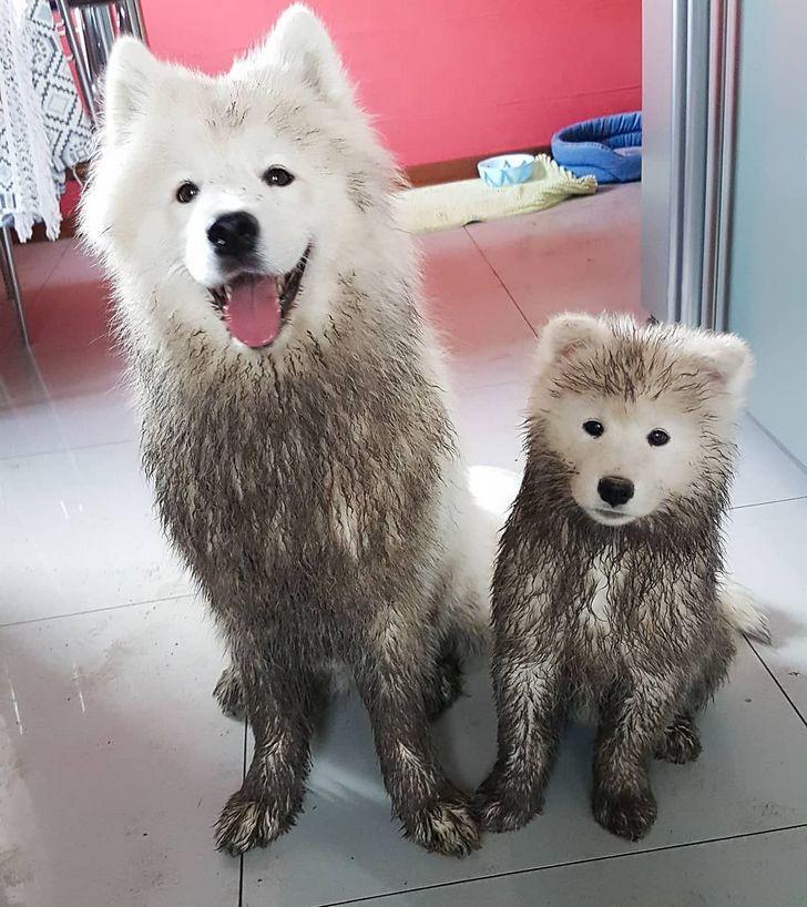 20 fois où des animaux ont fait les choses les plus bizarres ! By Ipnoze.com Animaux-bizarres-droles-002-01