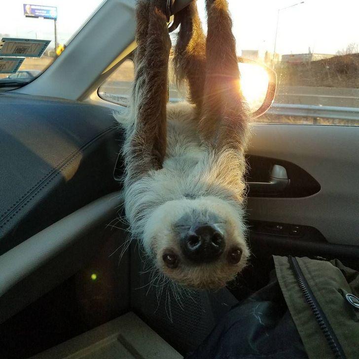 20 fois où des animaux ont fait les choses les plus bizarres ! By Ipnoze.com Animaux-bizarres-droles-002-02