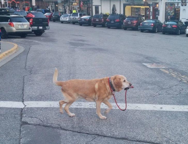 20 fois où des animaux ont fait les choses les plus bizarres ! By Ipnoze.com Animaux-bizarres-droles-003
