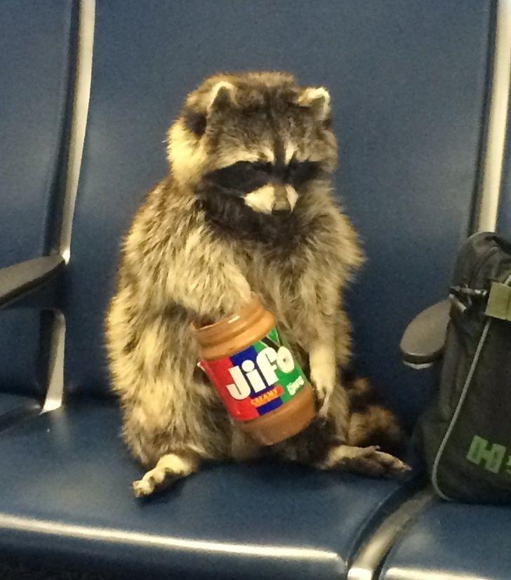 20 fois où des animaux ont fait les choses les plus bizarres ! By Ipnoze.com Animaux-bizarres-droles-012
