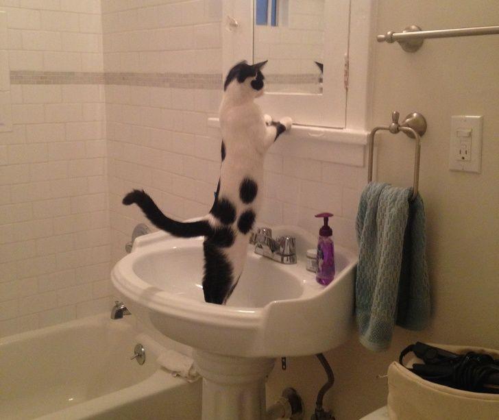 20 fois où des animaux ont fait les choses les plus bizarres ! By Ipnoze.com Animaux-bizarres-droles-013