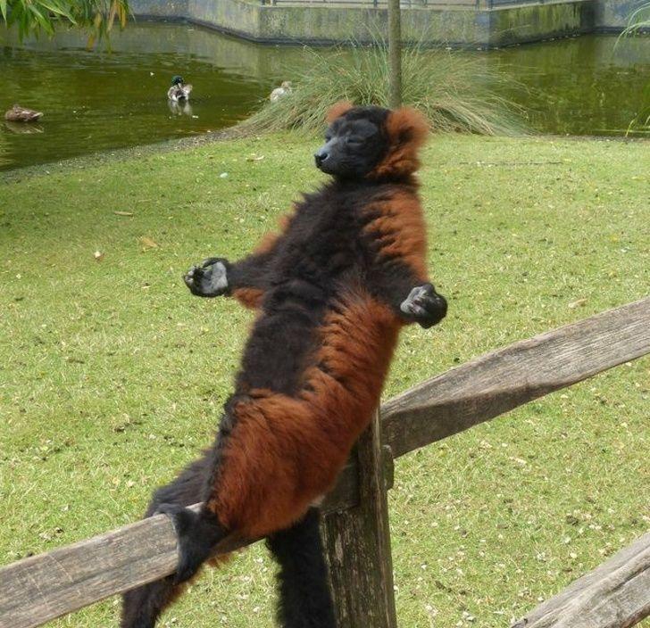 20 fois où des animaux ont fait les choses les plus bizarres ! By Ipnoze.com Animaux-bizarres-droles-015
