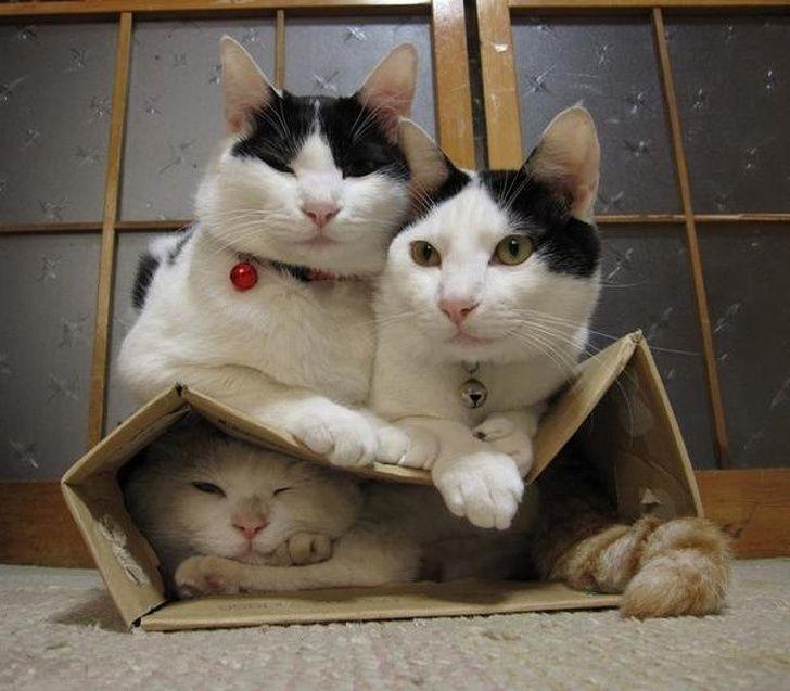 20 fois où des animaux ont fait les choses les plus bizarres ! By Ipnoze.com Animaux-bizarres-droles-016