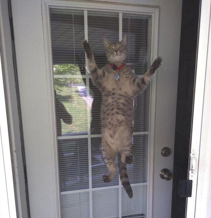 20 fois où des animaux ont fait les choses les plus bizarres ! By Ipnoze.com Animaux-bizarres-droles-018
