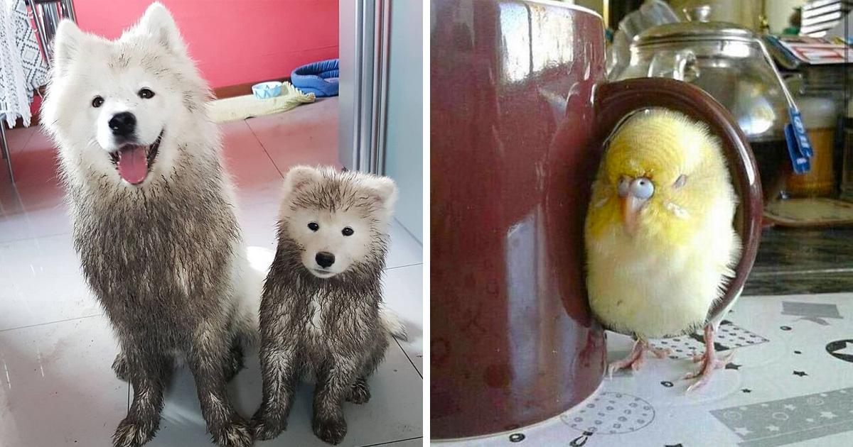 20 fois où des animaux ont fait les choses les plus bizarres ! By Ipnoze.com Animaux-bizarres-droles