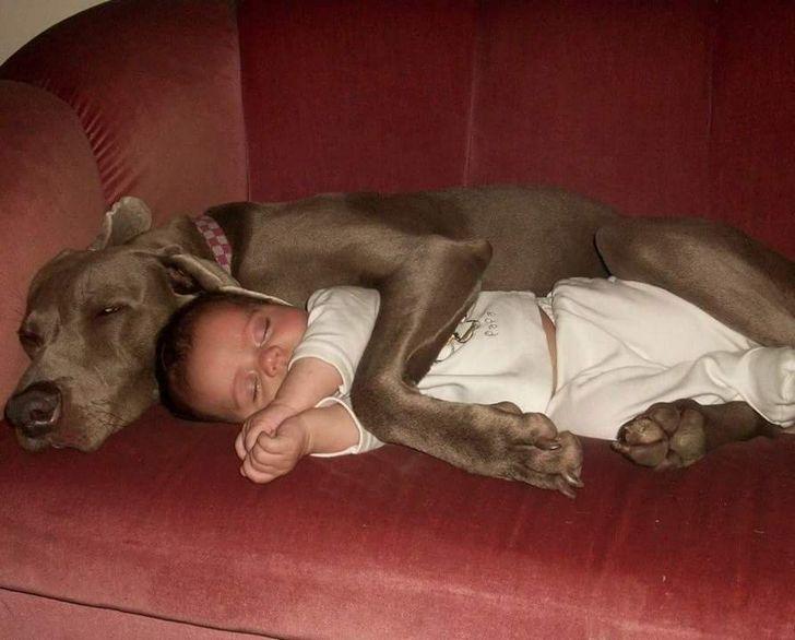23 photos qui montrent exactement pourquoi tous les enfants devraient avoir un animal de compagnie (nouvelles images)