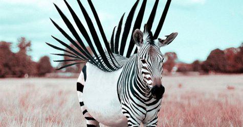 Voici comment j'imagine que les animaux se comportent quand vous ne regardez pas (20 images)