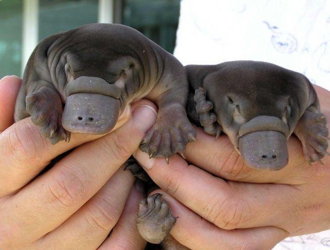 18 bébés animaux que vous n'avez probablement jamais vus
