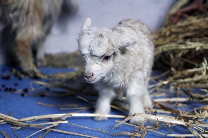 22 bébés animaux qui vont mettre un peu de soleil dans ta journée