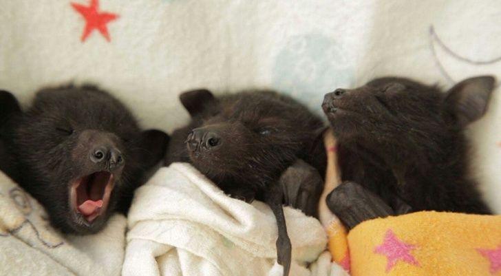 23 bébés animaux sauvages qui vont mettre un peu de soleil dans ta journée