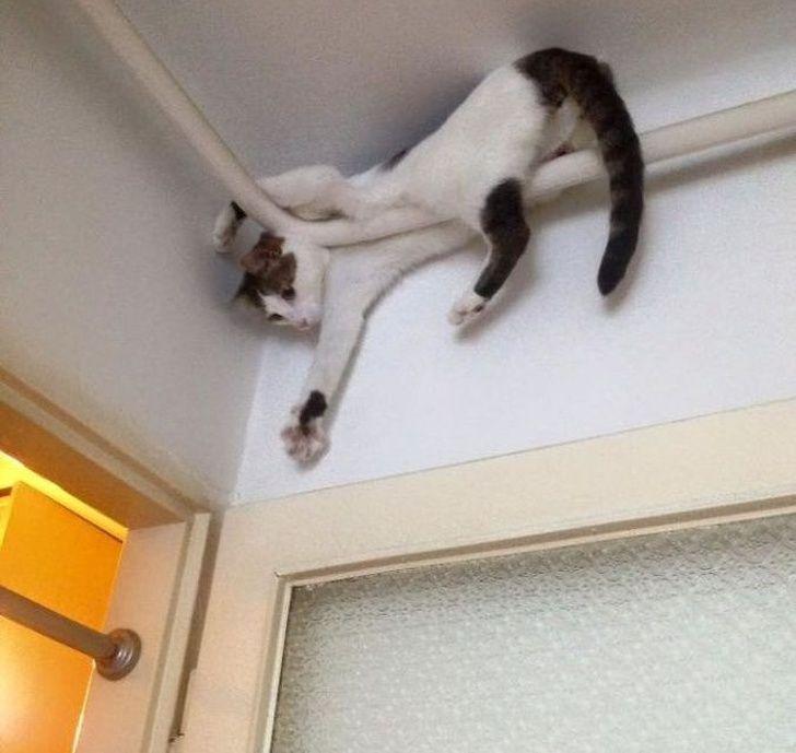 20 chats qui sont bien trop cool pour ce monde ordinaire