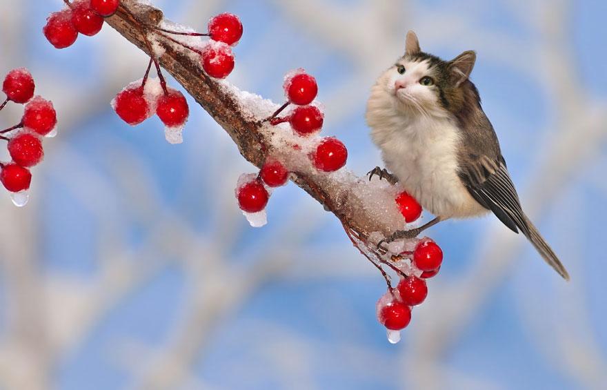 «Je photoshope mes chats depuis quelques années. Suis-je allée trop loin?» (26 images)