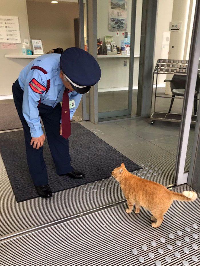 Il y a deux chats au Japon qui tentent de se faufiler dans un musée depuis des années (30 photos)