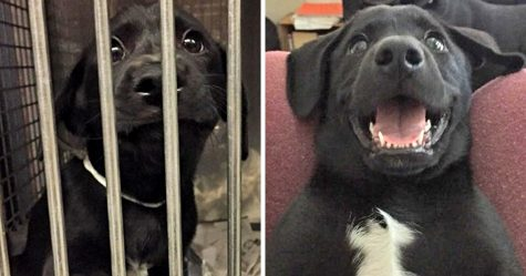 30 photos de chiens avant et après avoir grandi