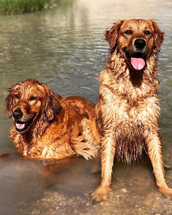 20 photos de chiens qui sont mieux que n'importe quel antidépresseur