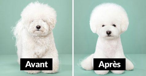 8 chiens avant et après leurs toilettages