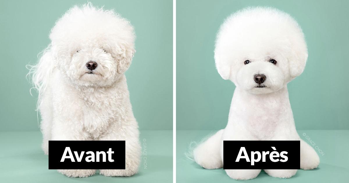 7 chiens avant et après un toilettage japonais (nouvelles photos)