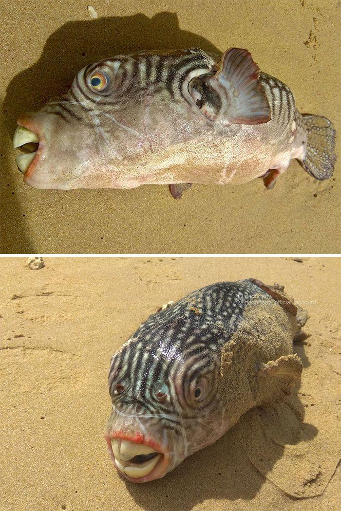 Un pêcheur russe présente les créatures terrifiantes qu'il trouve en eau profonde et les gens veulent qu'il arrête (nouvelles photos)