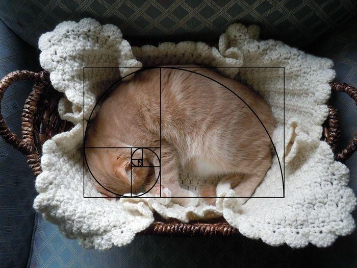 La séquence de Fibonacchat prouve que les chats sont parfaits (20 photos)