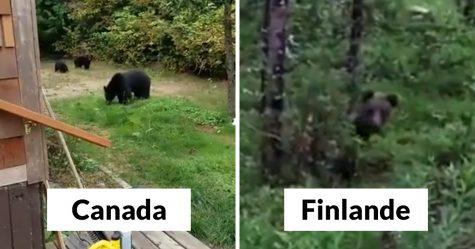 Les gens rient des différentes façons dont les Canadiens et les Finlandais font face aux ours