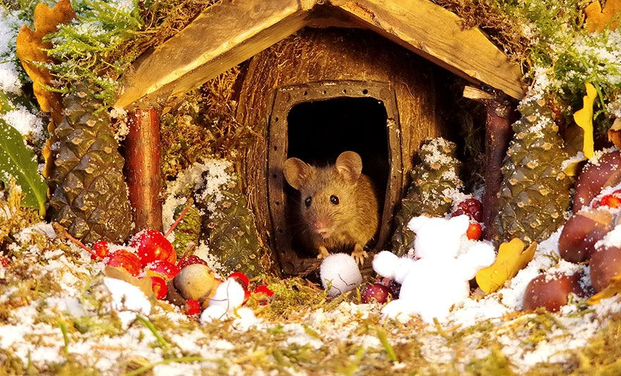 Un homme a découvert une famille de souris vivant dans son jardin et leur a construit un village miniature