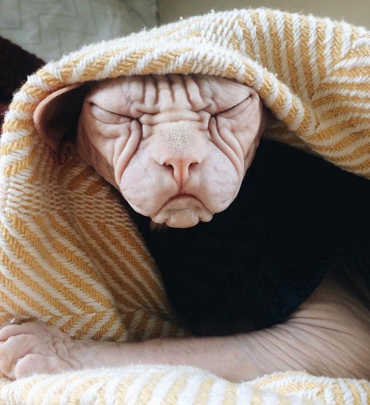 21 photos mignonnes qui prouvent que les animaux sont des copies poilues des humains