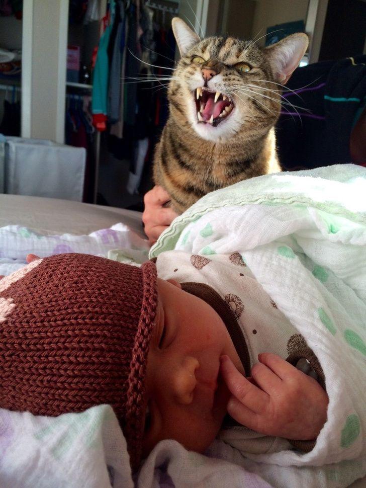 25 fois où des animaux ont fait des choses pour la première fois et nous ont fait rigoler (nouvelles images)