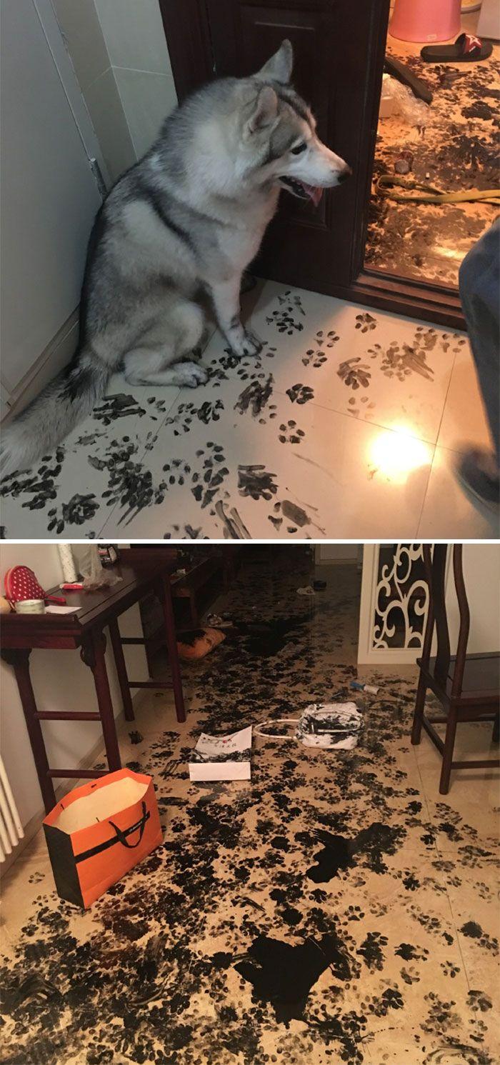 33 fois où des gens ont laissé seuls leurs chats et chiens, mais l'ont profondément regretté