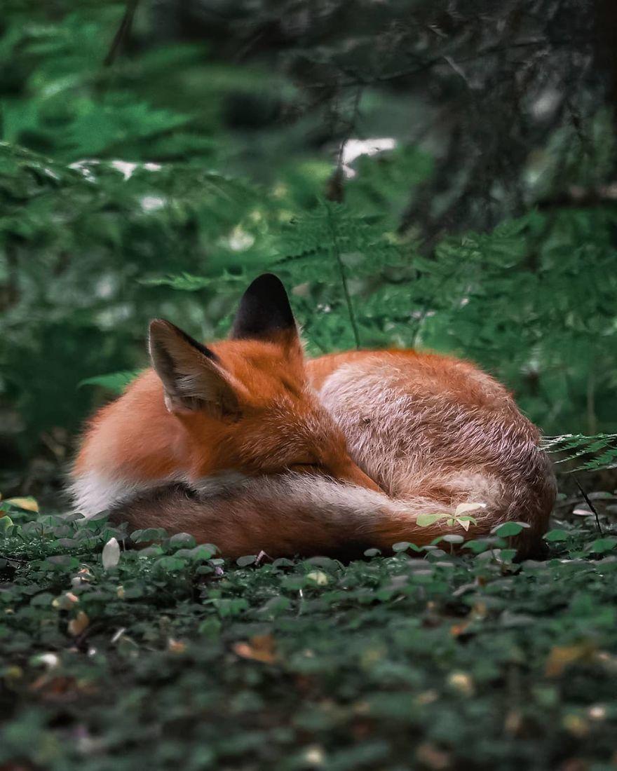 33 photos magiques d'animaux qui prouvent que les forêts enchantées existent en Finlande