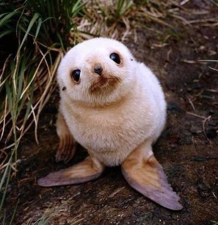 31 bébés animaux mignons qui peuvent faire fondre même les coeurs de glace (nouvelles images)