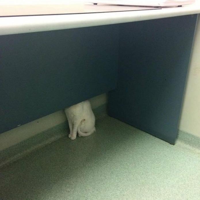 Quelqu'un a partagé une photo de son chat caché chez le vétérinaire et les internautes ont répondu avec leurs propres photos hilarantes