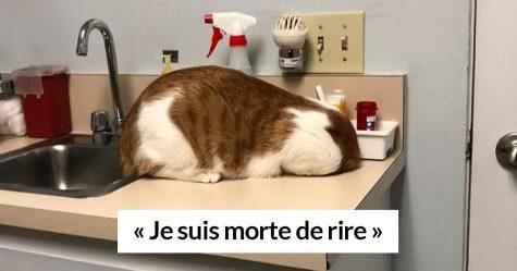 15 chats qui viennent de réaliser que vous les amenez chez le vétérinaire