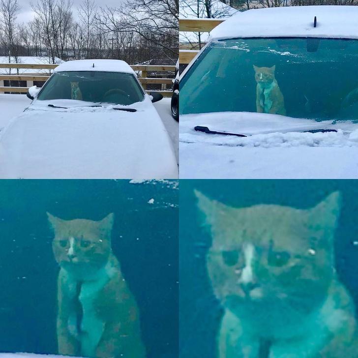 23 fois où les chats ont prouvé qu'ils ne sont pas faits pour la neige