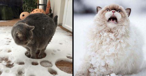 20 fois où des chats n'avaient pas envie d'être dans vos foutus selfies et le résultat était hilarant