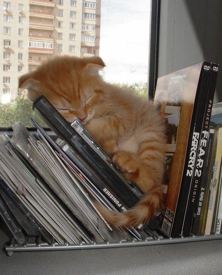 Si jamais tu es triste, ces 31 chats endormis vont te faire sourire
