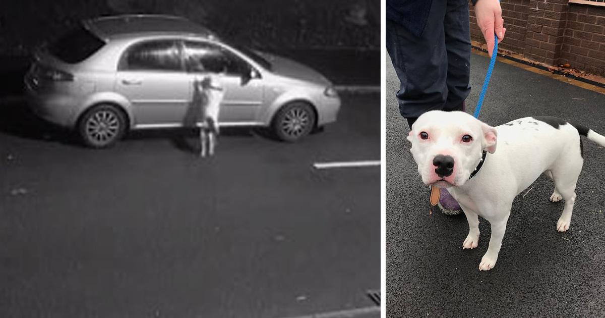 Ce chien ne réalisait pas qu'il venait d'être abandonné, alors il a essayé désespérément de retourner dans la voiture