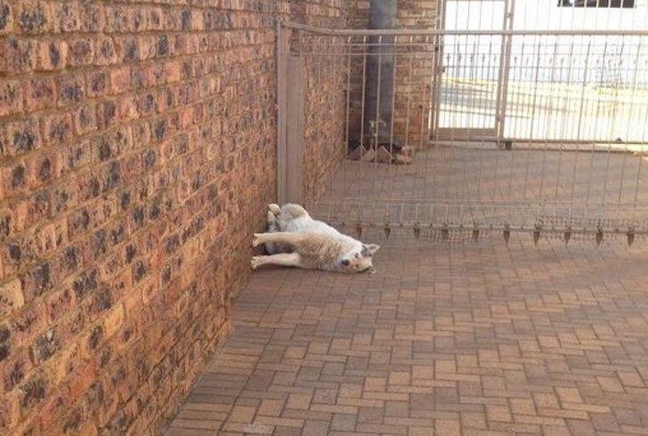 23 fois où des chiens étaient si bizarres qu'on était incapable d'expliquer leur comportement