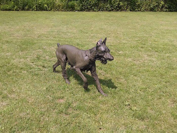 33 raisons pour lesquelles vous ne devriez jamais laisser votre chien jouer dans la boue