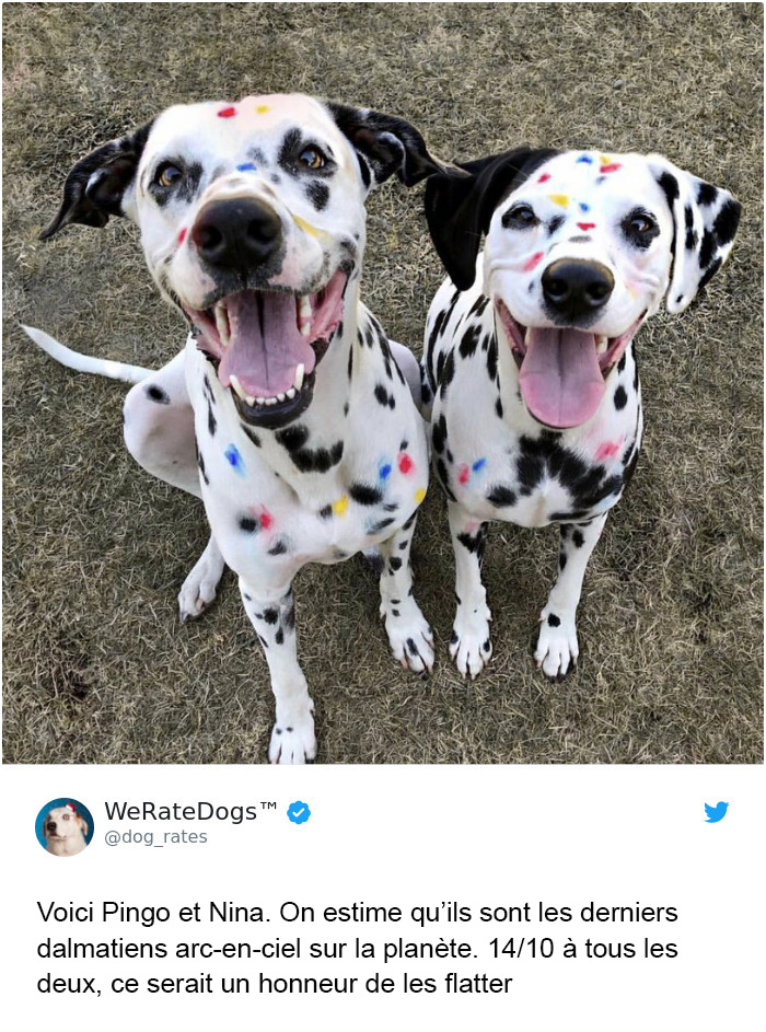 22 fois où des gens ont demandé que l'on note leurs chiens et ont obtenu des résultats hilarants