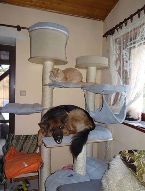 33 chiens qui pensent qu'ils sont des chats