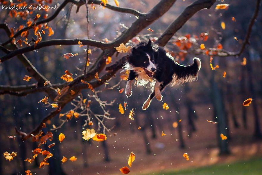 Voici les 33 meilleures photos de chiens que j'ai jamais prises