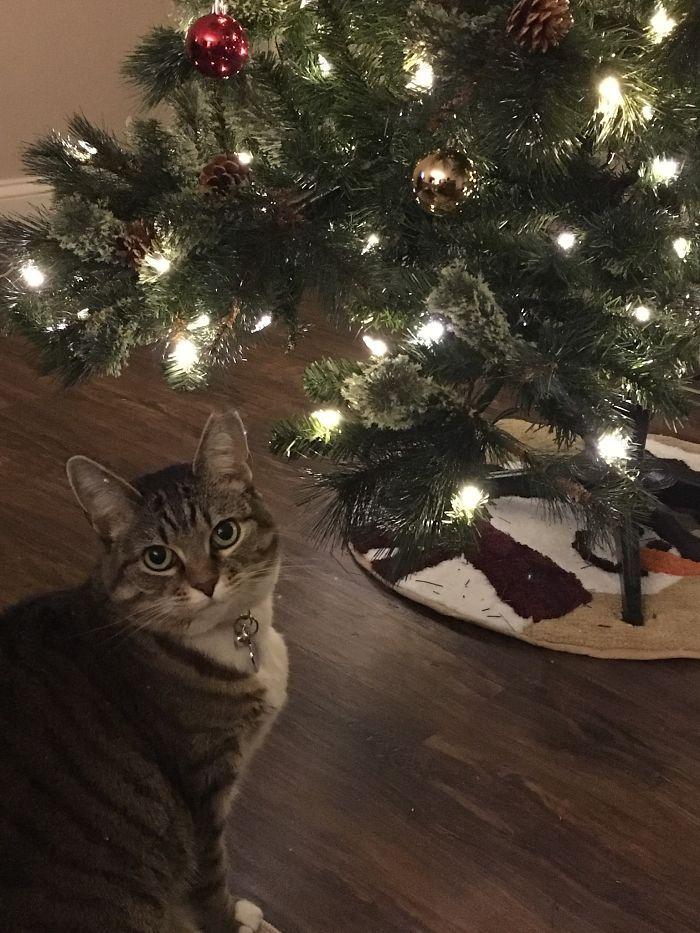 Comment emballer un cadeau quand vous avez un chat (8 images)