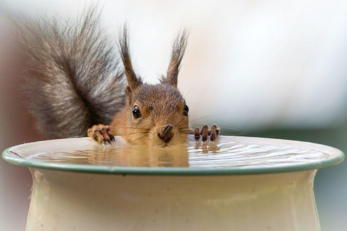 J'ai suivi des écureuils avec mon appareil photo chaque jour pendant 6 ans et voici mes 33 meilleures photos