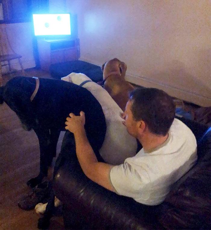 33 chiens qui ne réalisent pas à quel point ils sont énormes et pensent qu'ils sont tout petits
