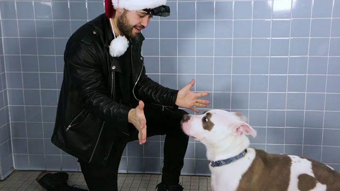 Ce magicien a fait disparaitre des friandises et les réactions des chiens de refuge vont vous faire rire
