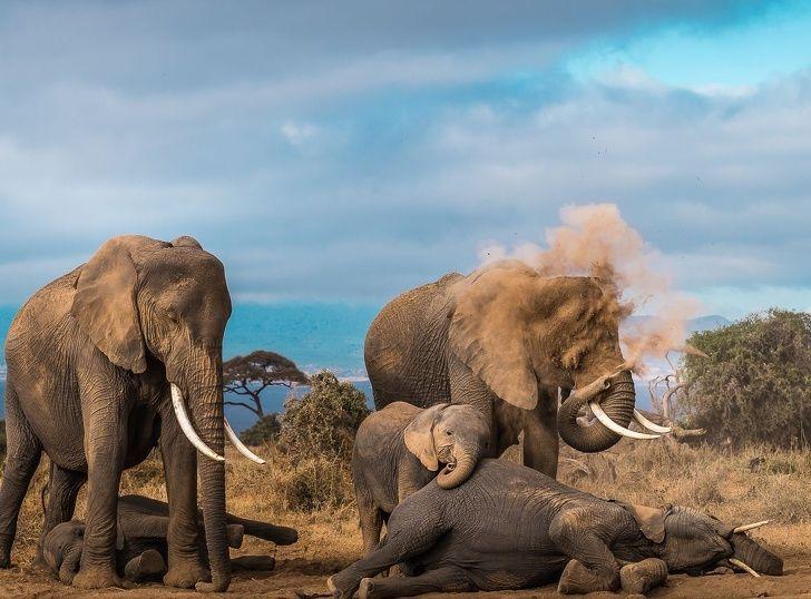 National Geographic Vient D'annoncer Les Meilleures Photos