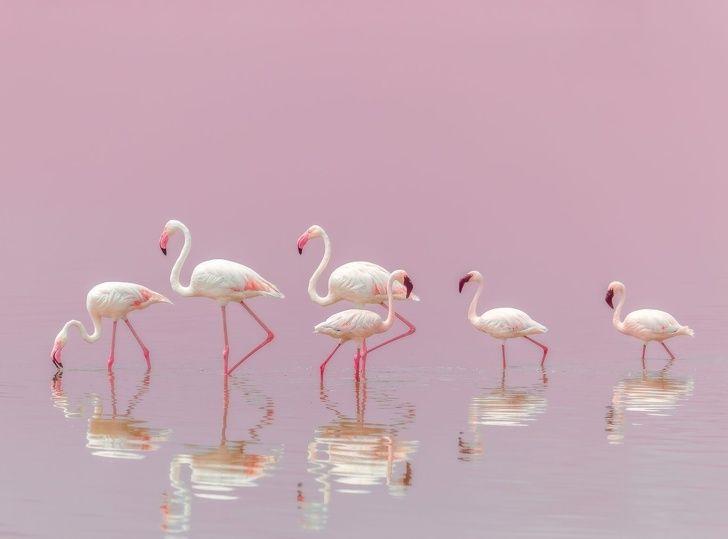 National Geographic vient d'annoncer les meilleures photos de 2018 et elles sont à couper le souffle