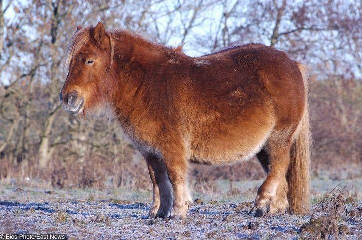 Voici à quoi ressemblent 24 animaux avant l'accouchement