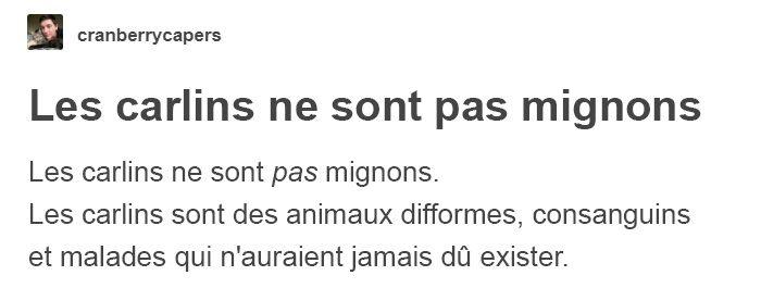 «Les carlins ne sont pas mignons, ce sont des animaux difformes et malades qui ne devraient pas exister» : ce message pourrait changer votre façon de voir les carlins